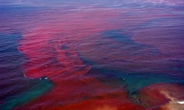 Red Tide outbreaks off the coast of Florida have been increasing in severity and number since the BP oil spill in the Gulf of Mexico.