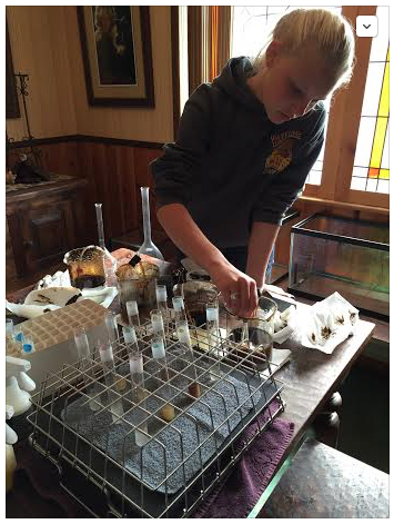 Alana conducting toxicity tests at her home in the Kern River Valley