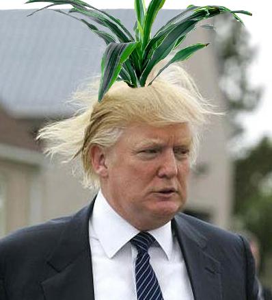 trump-plant
